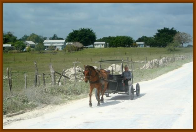 Traditioneller Mennoniten Buggie